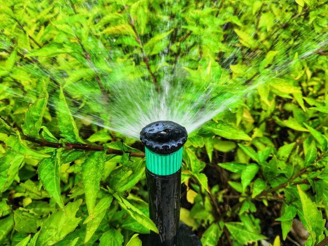 A fan sprinkler watering shrubbery