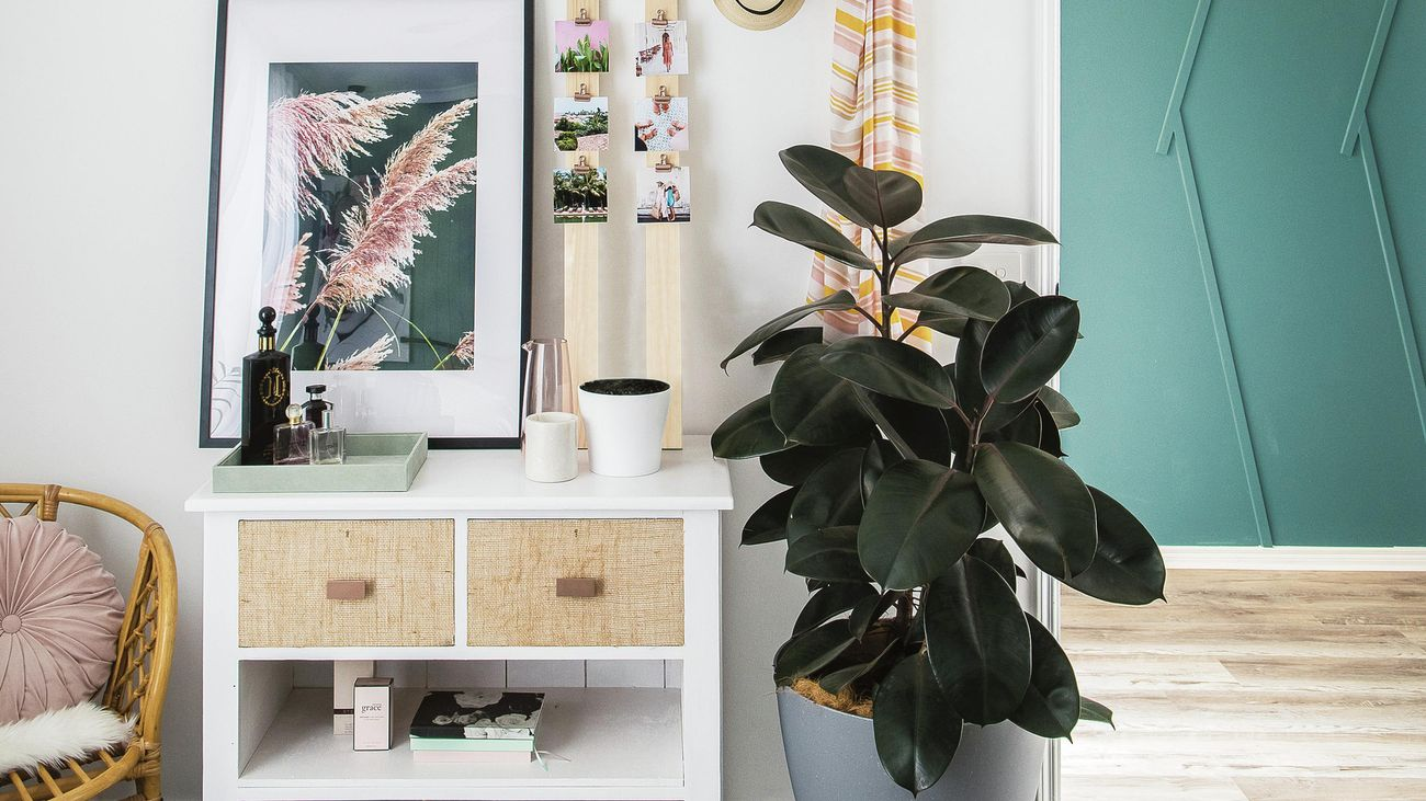 rubber plant in grey pot next to white dressing table with hessian drawers