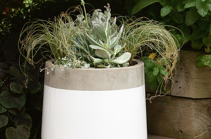 A white and grey garden pot filled with succulents