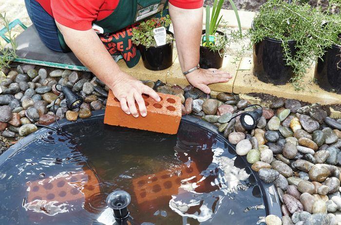 DIY Step Image - How to create a water garden . Blob storage upload.