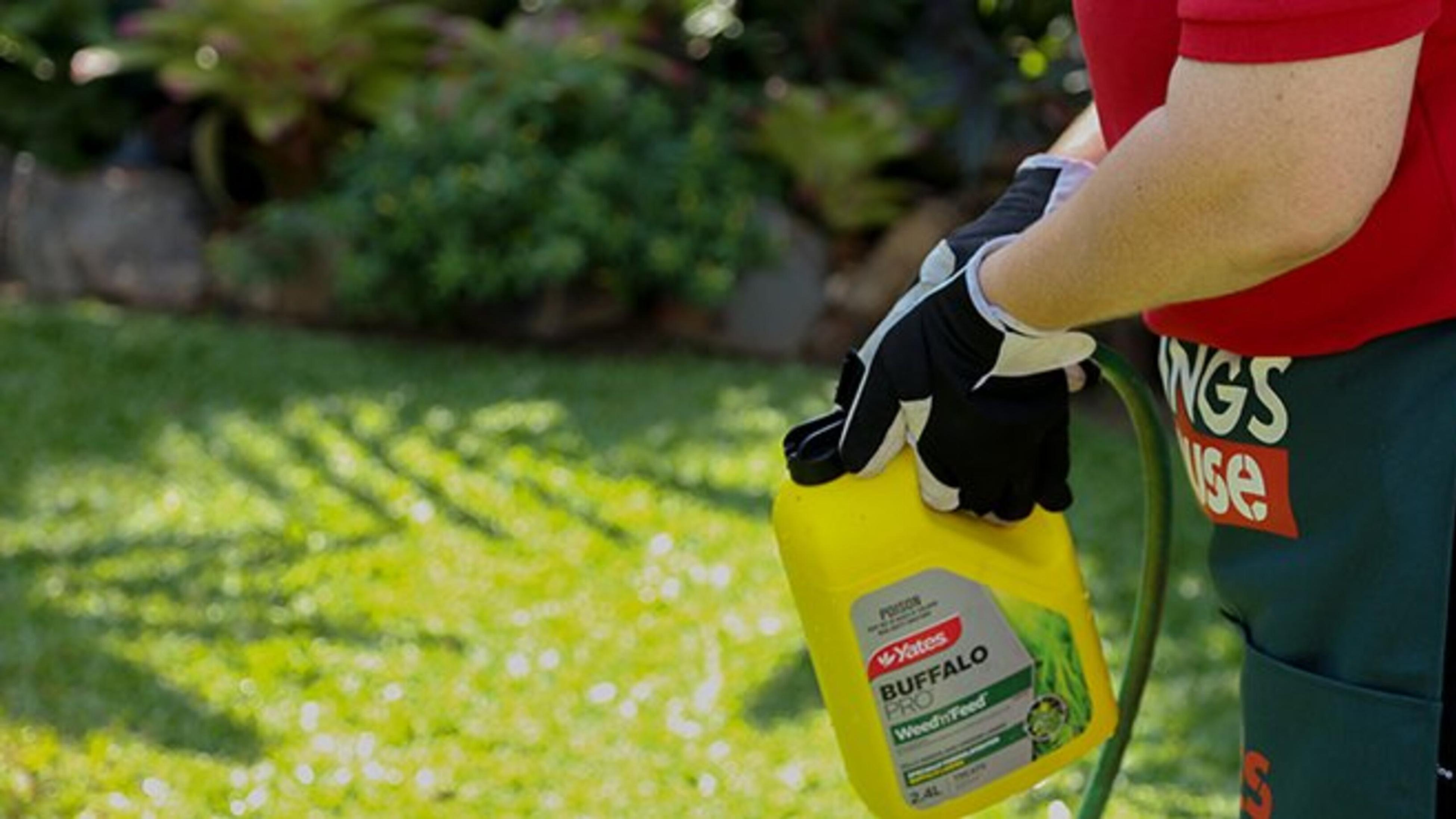 Person spraying Buffalo Pro fertiliser on lawn.