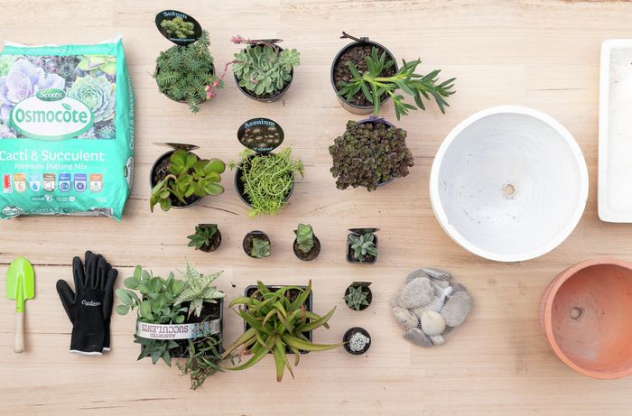 Variety of succulents and potting mix laid out on a benchtop.