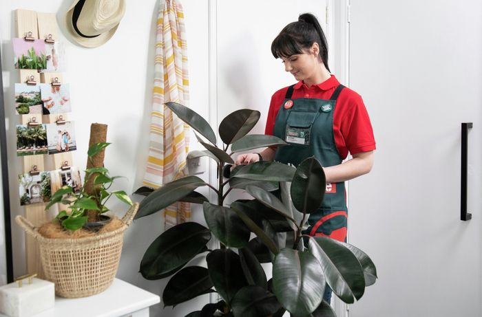 DIY Step Image - How to add bedroom greenery with relaxing plants. Blob storage upload.