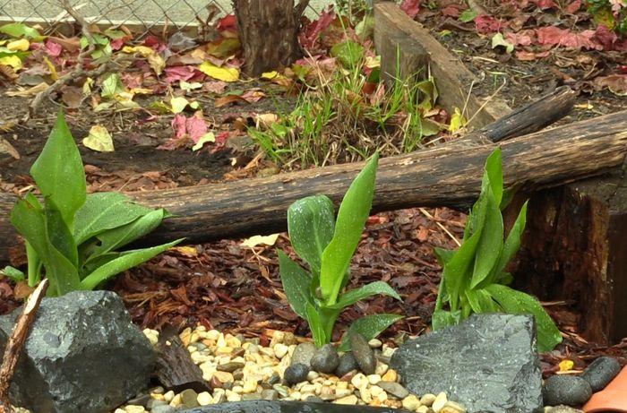Plants in backyard area.