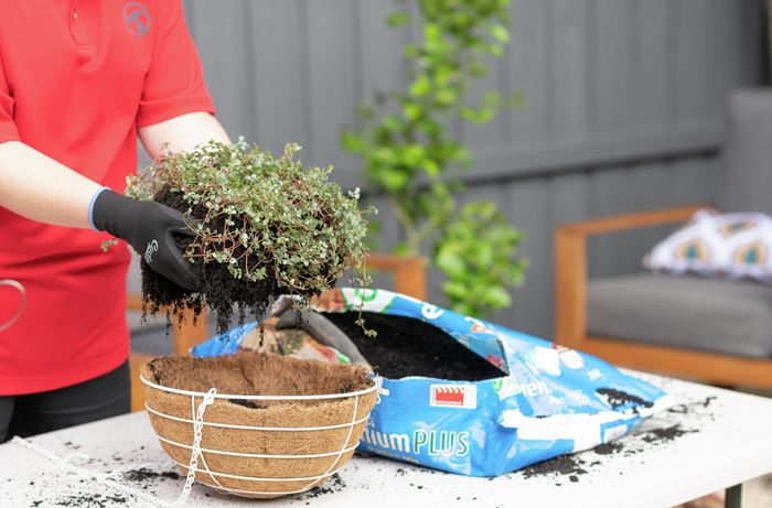 A Bunnings team member placing a plant into a hanging basket