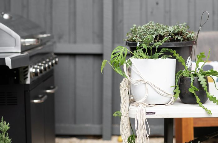 A selection of potted plants sitting on an outdoor table