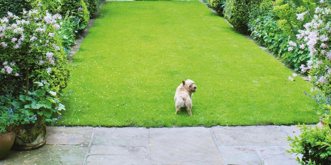 Dog in backyard area.