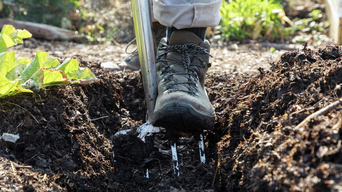 Close-up of someone wearing boots digging into soil with a garden fork