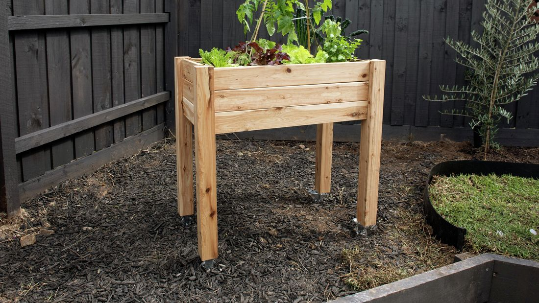 Plants growing in a raised timber garden bed on legs