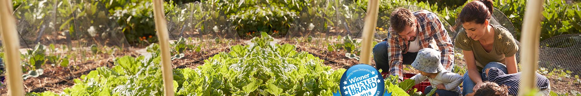 Family picking lettuce in a small farm. Winner trusted brand 2018 logo.