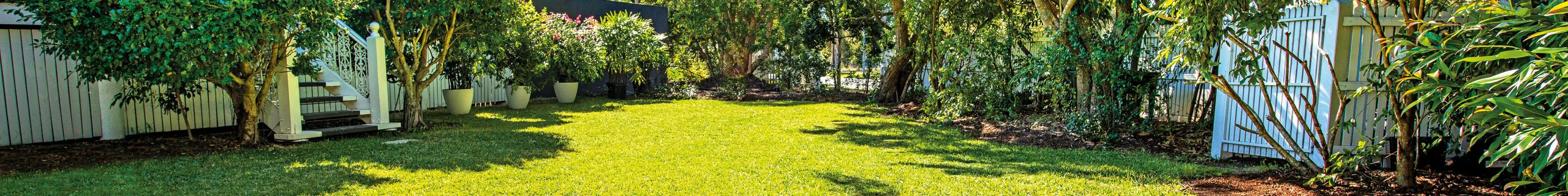 Lawn and trees in a backyard.