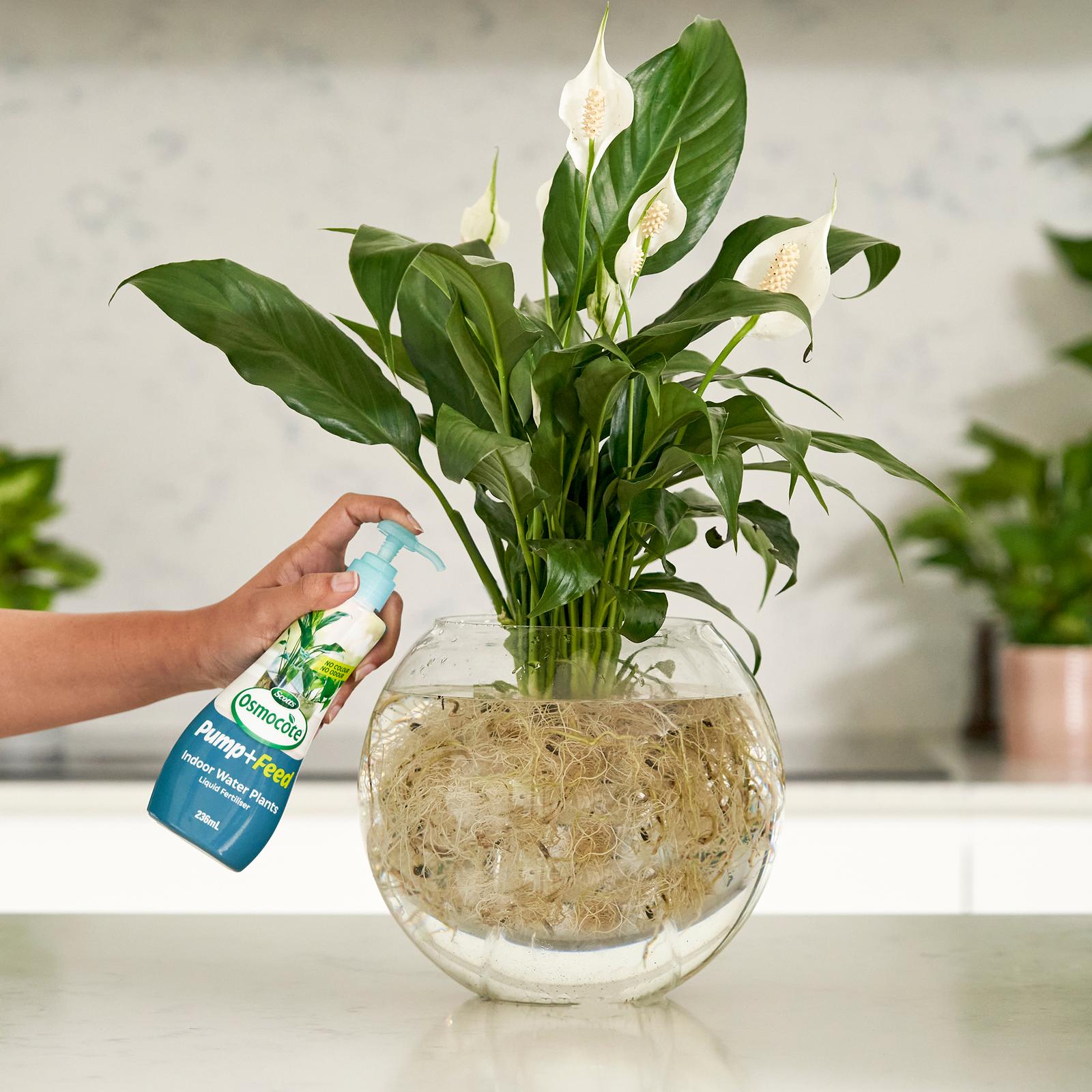 Scotts Osmocote 20ml Pump+Feed for Indoor Water Plants   Bunnings ...