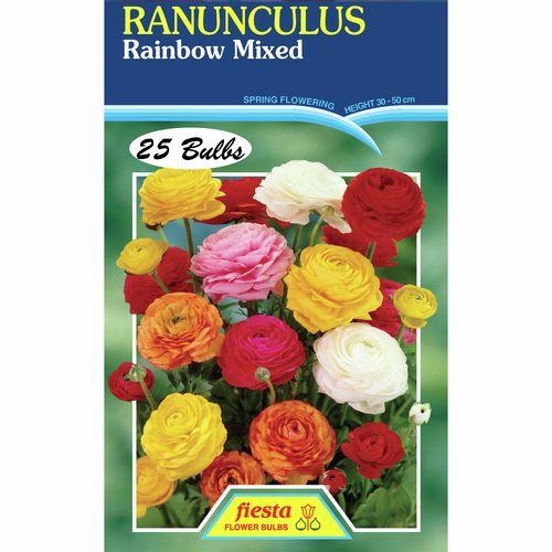 Ranunculus Rainbow Mixed - 25 Bulbs