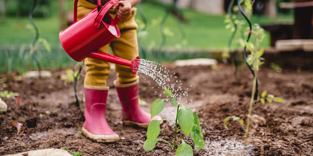 A child using a red watering can to water the garden