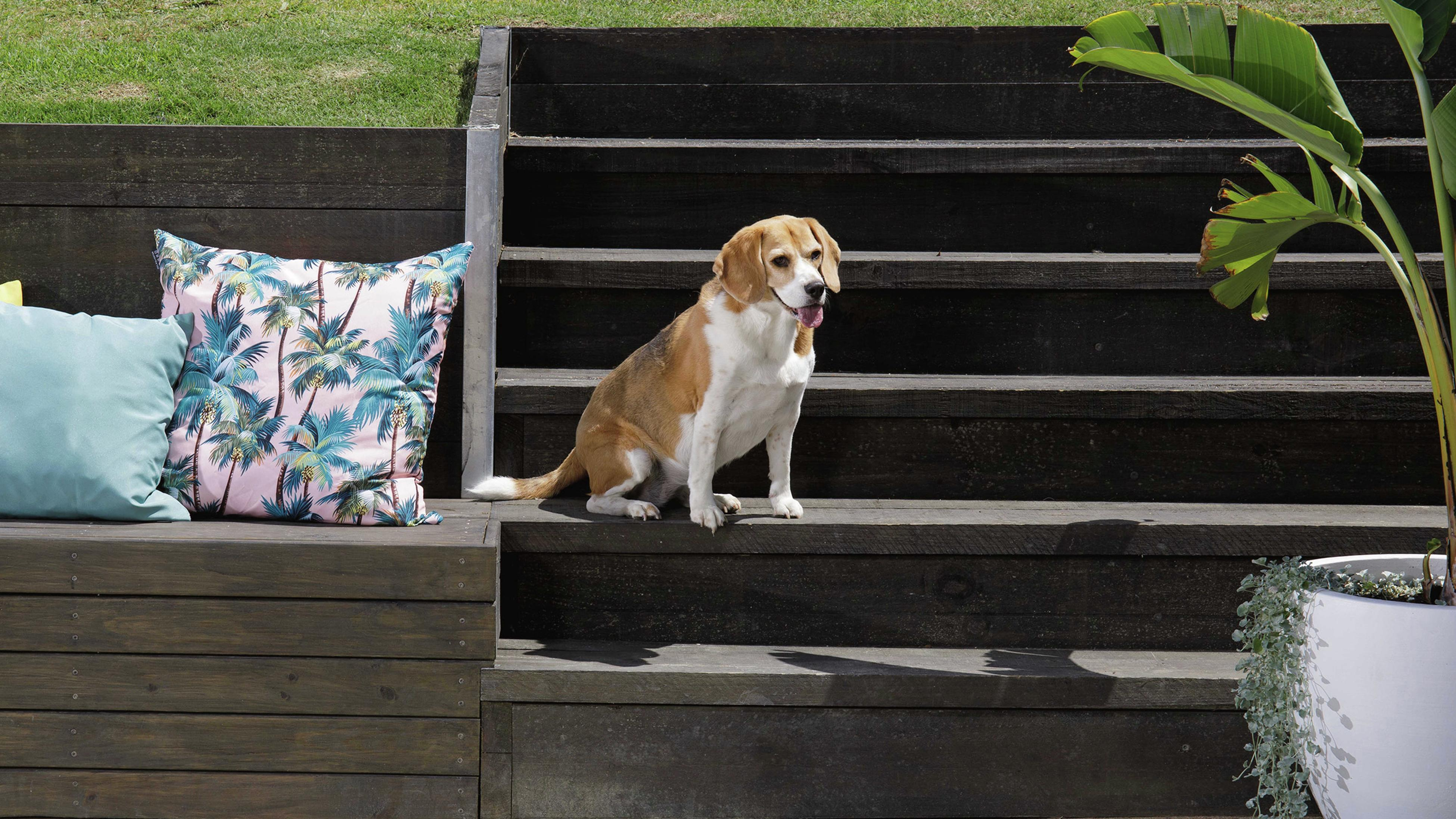 A dog sitting on steps leading down to outdoor dining area