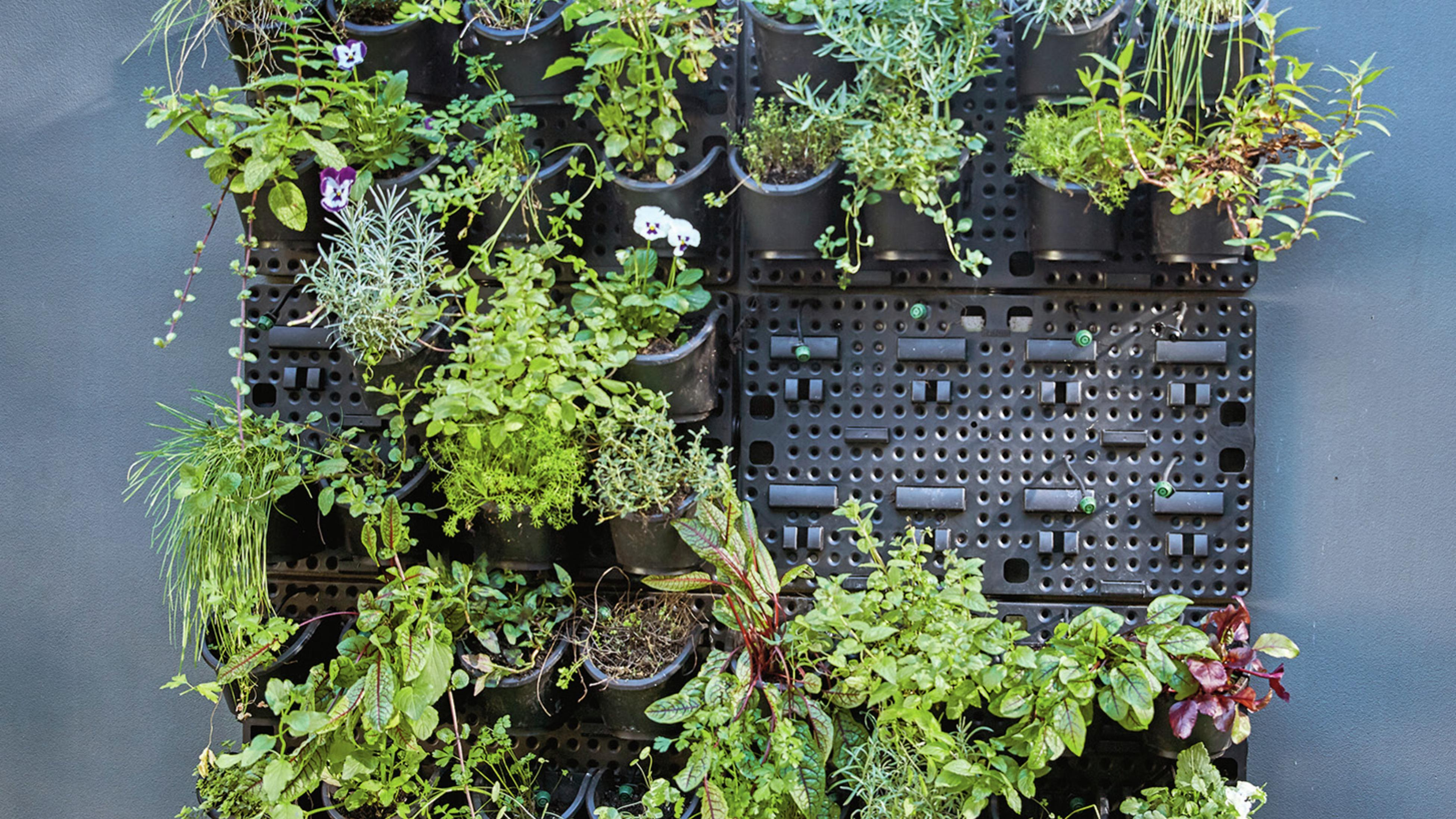Vertical garden with lots of herbs and flower plants growing in the pots.