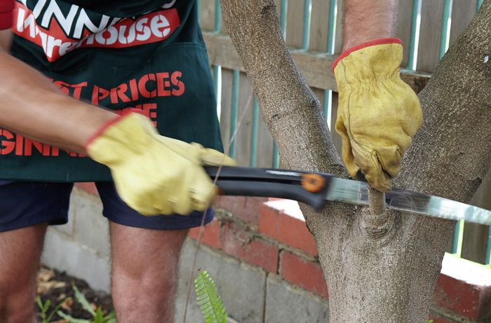 Person sawing a large twig off a tree.