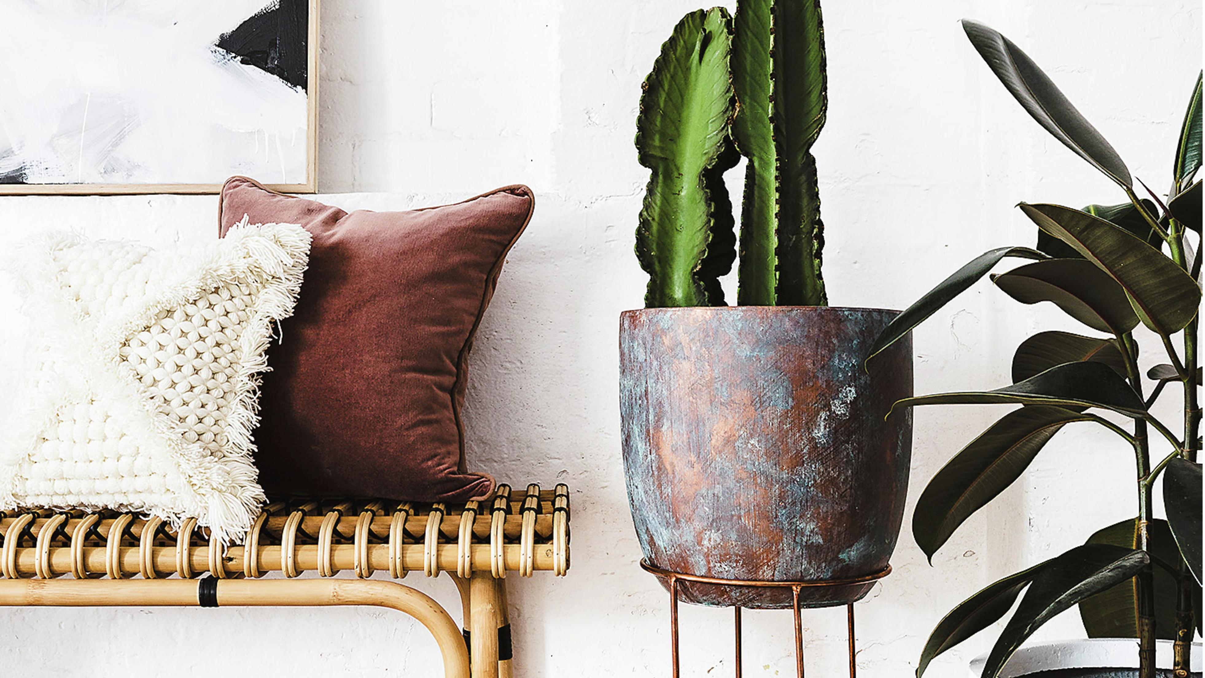 Woven bench, cactus in standing pot.