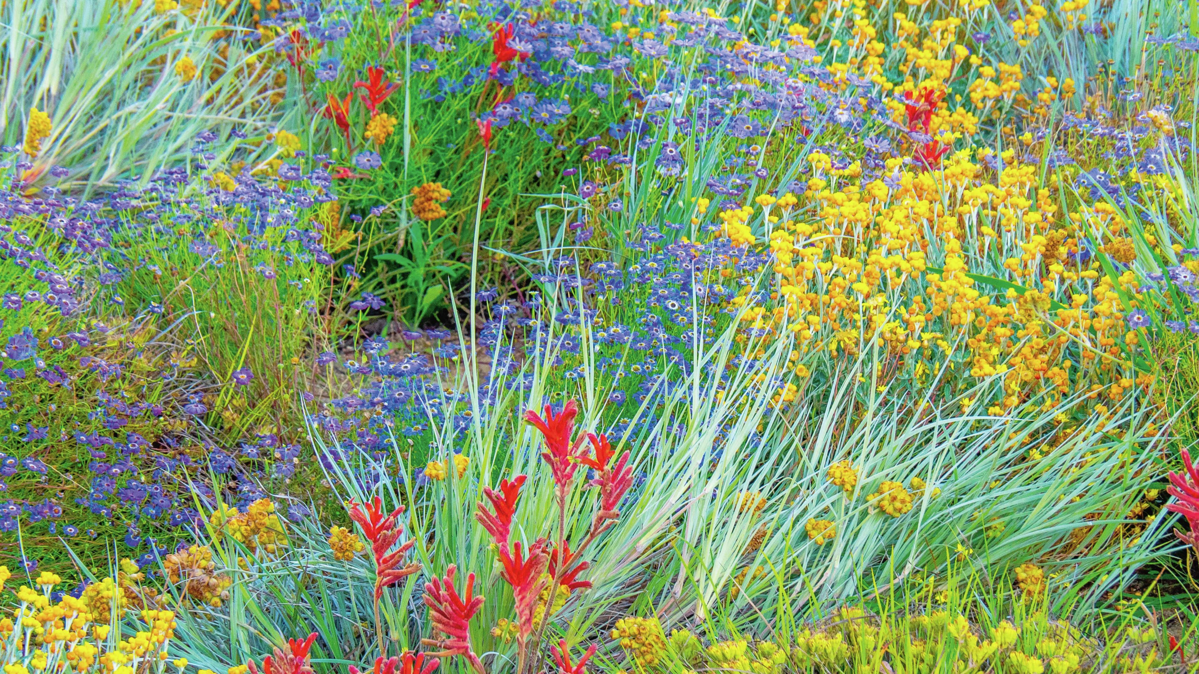Colourful field of native plants