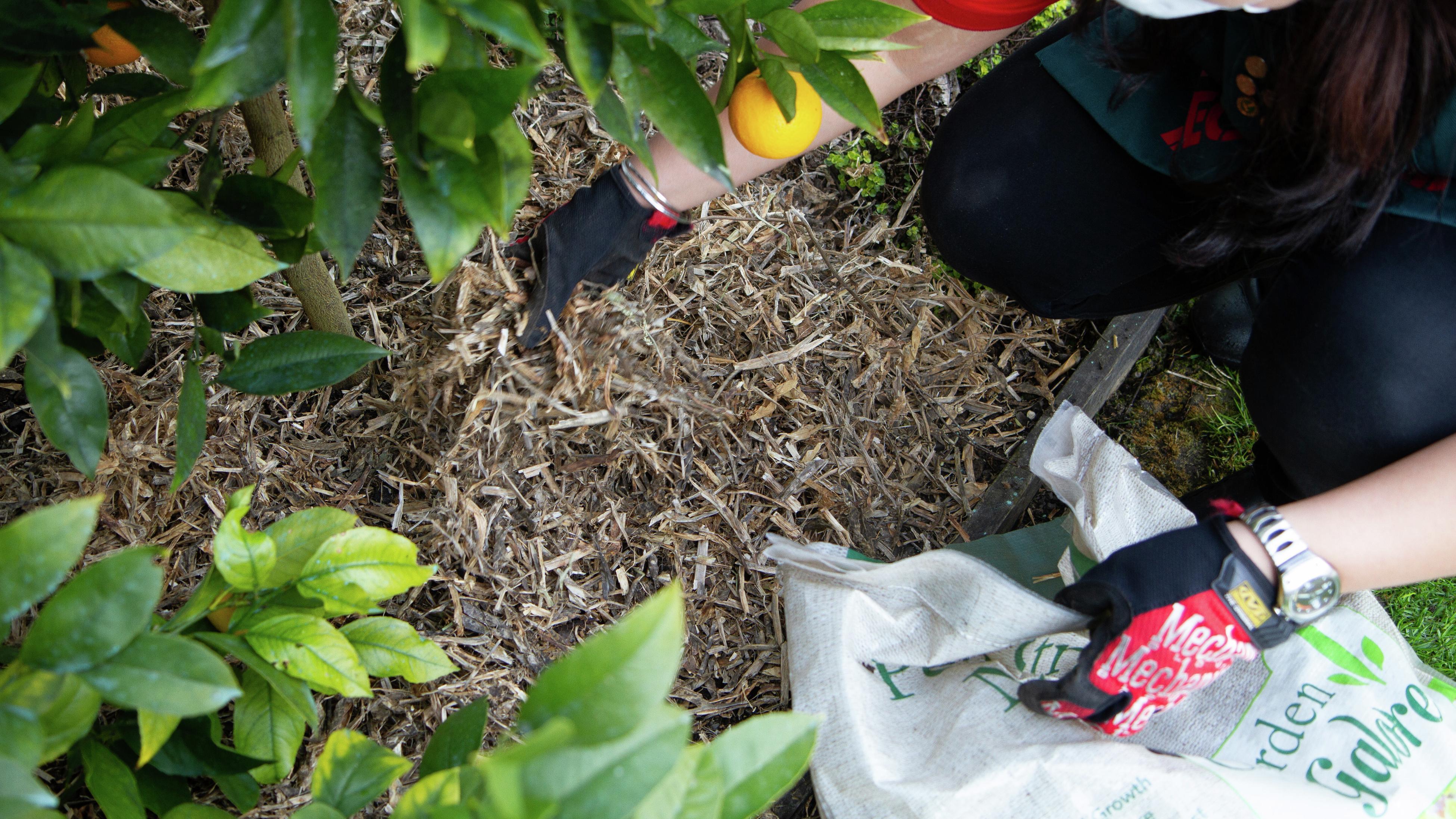 A person spreading mulch.