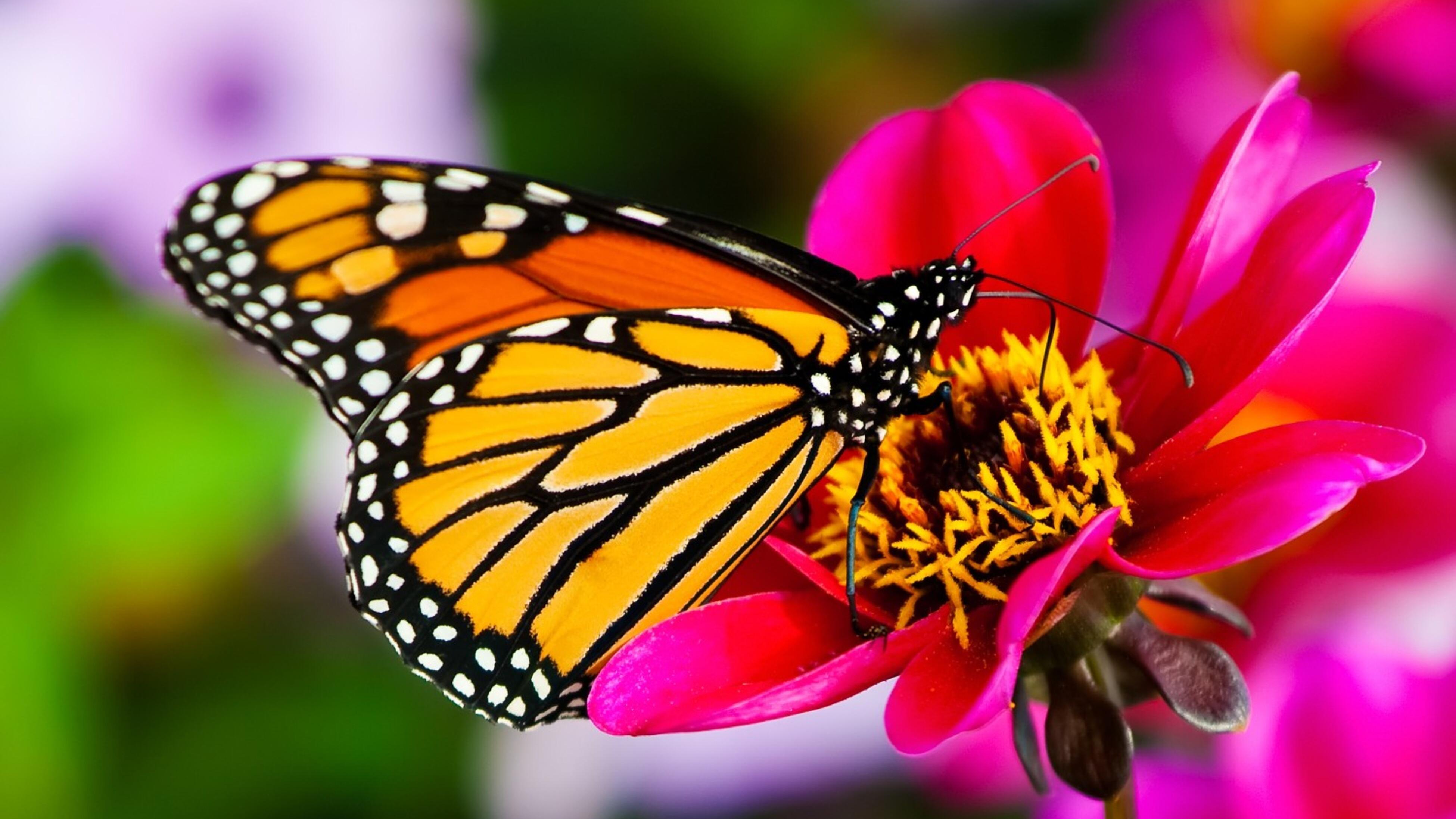 Butterfly landing on a flower.