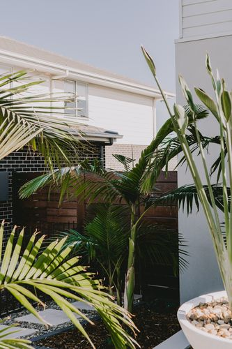 Garden with tall ferns and stepping stones