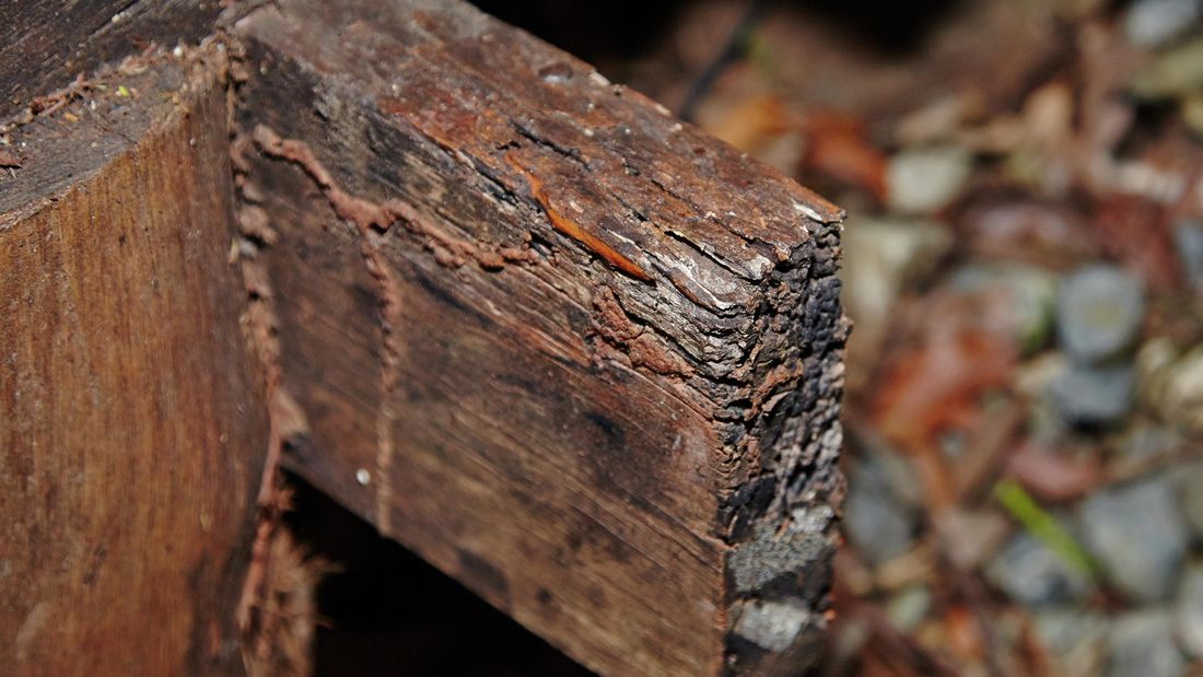 Closeup of dry rot damage to a length of timber