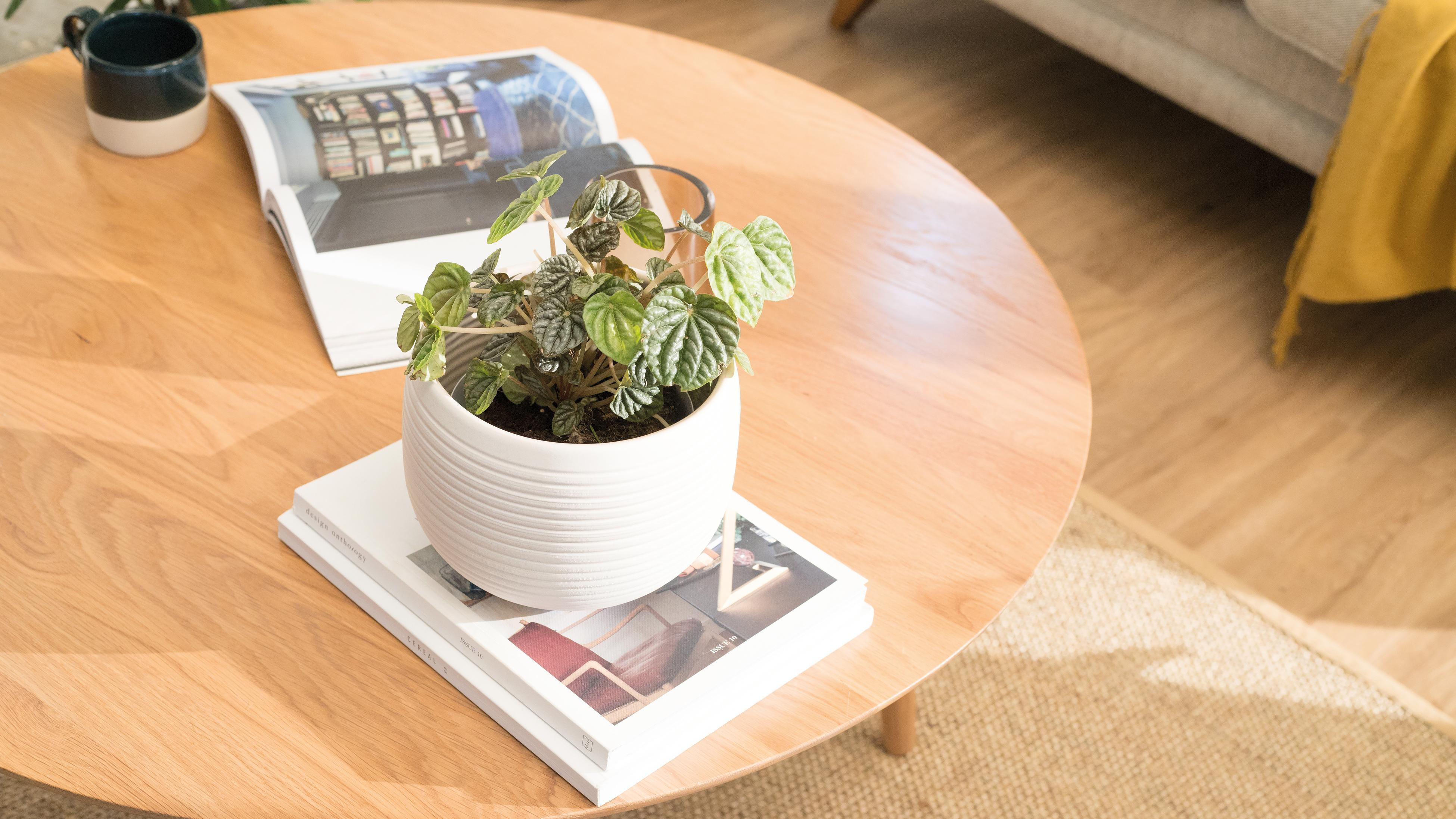 Open magazine, mug and potted plant on a round wooden coffee table