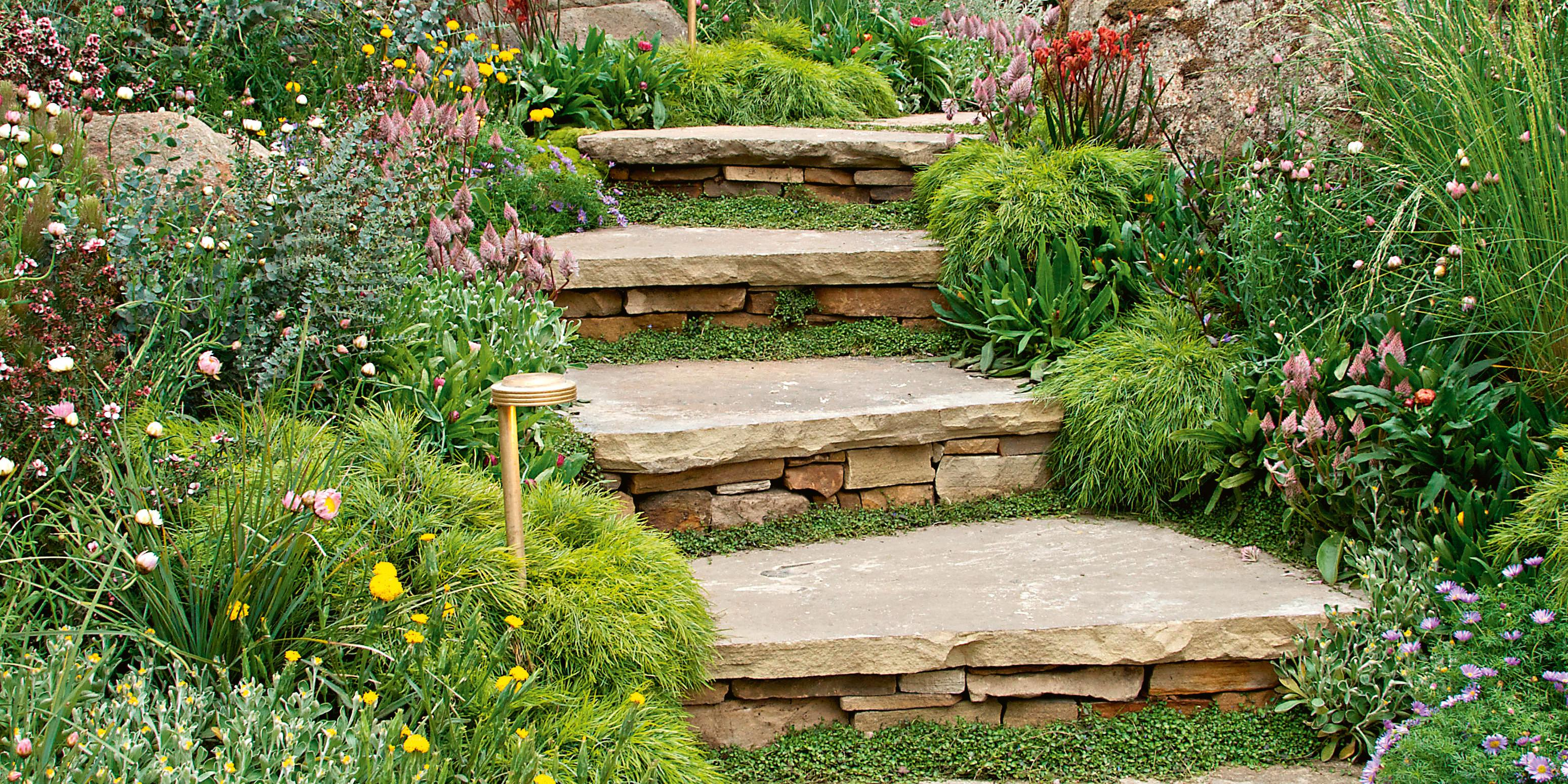 Garden with paving steps and plants.