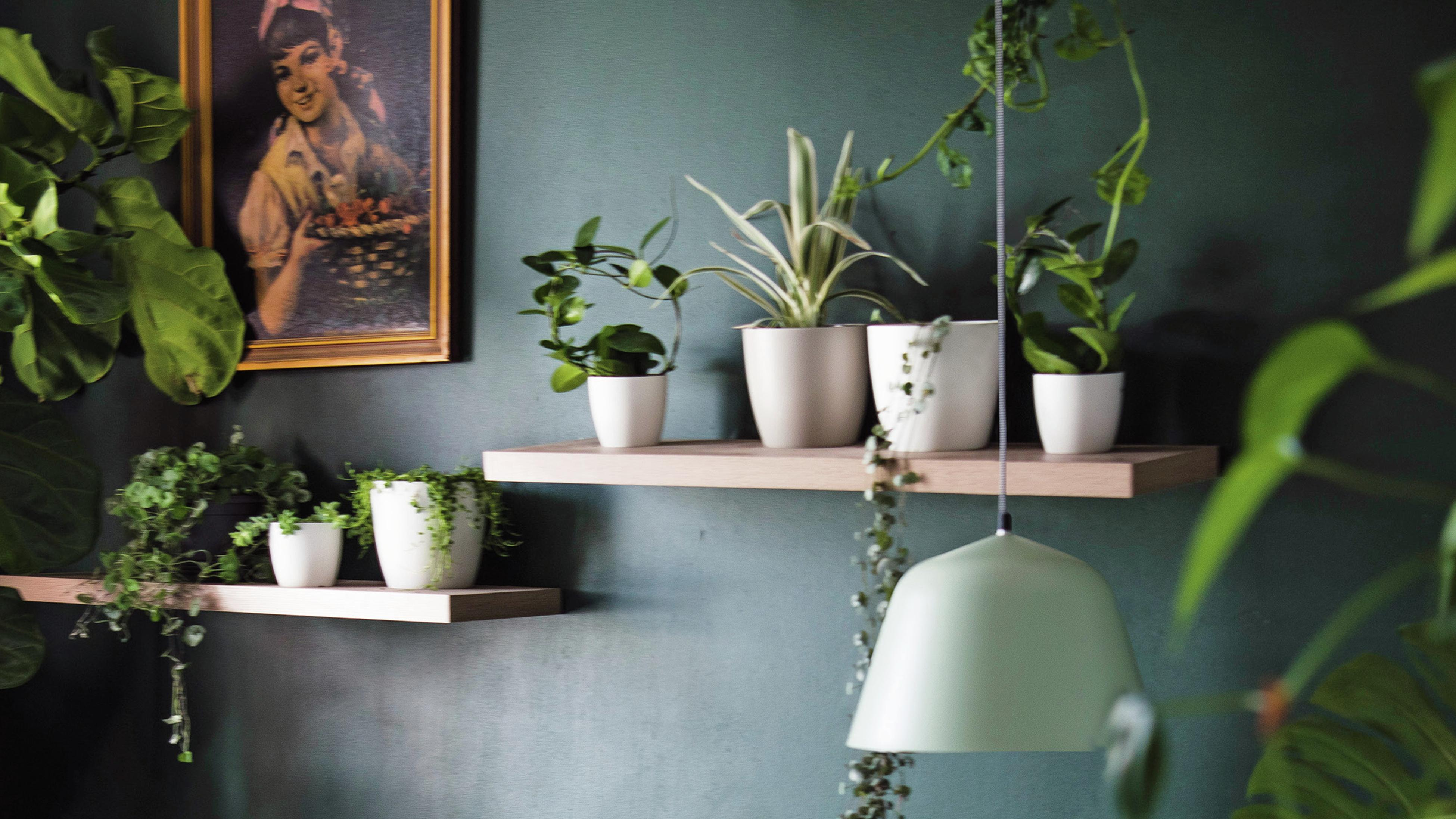 Green bedroom feature wall and floating shelves carrying small potted plants