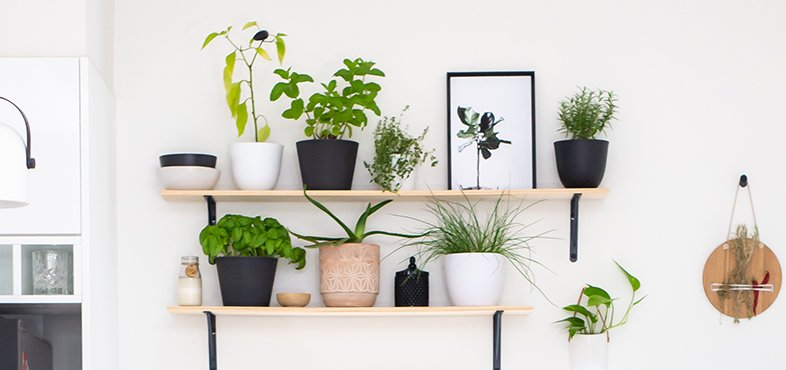 Shelving with many indoor plants