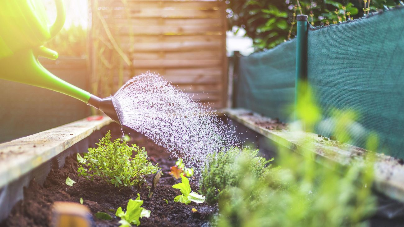Close-up of a someone watering plants in a raised bed using a watering can