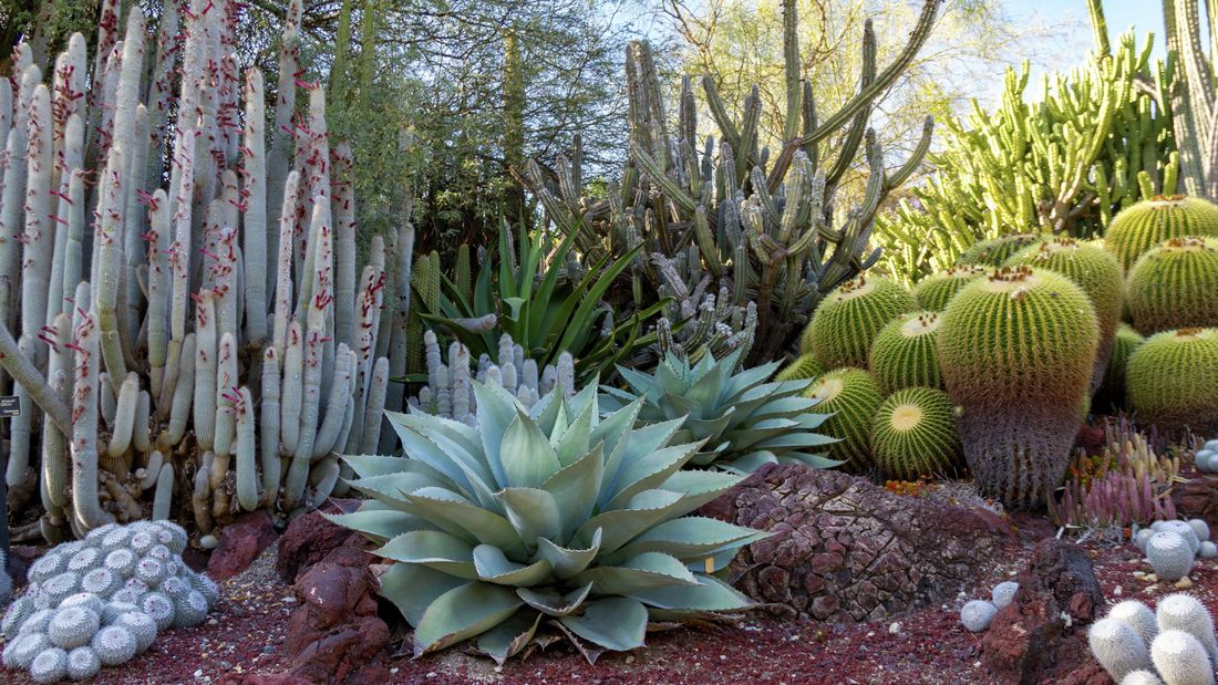 A range of plants including cacti and succulents.