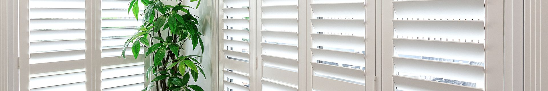 White venetian blinds with indoor plant.
