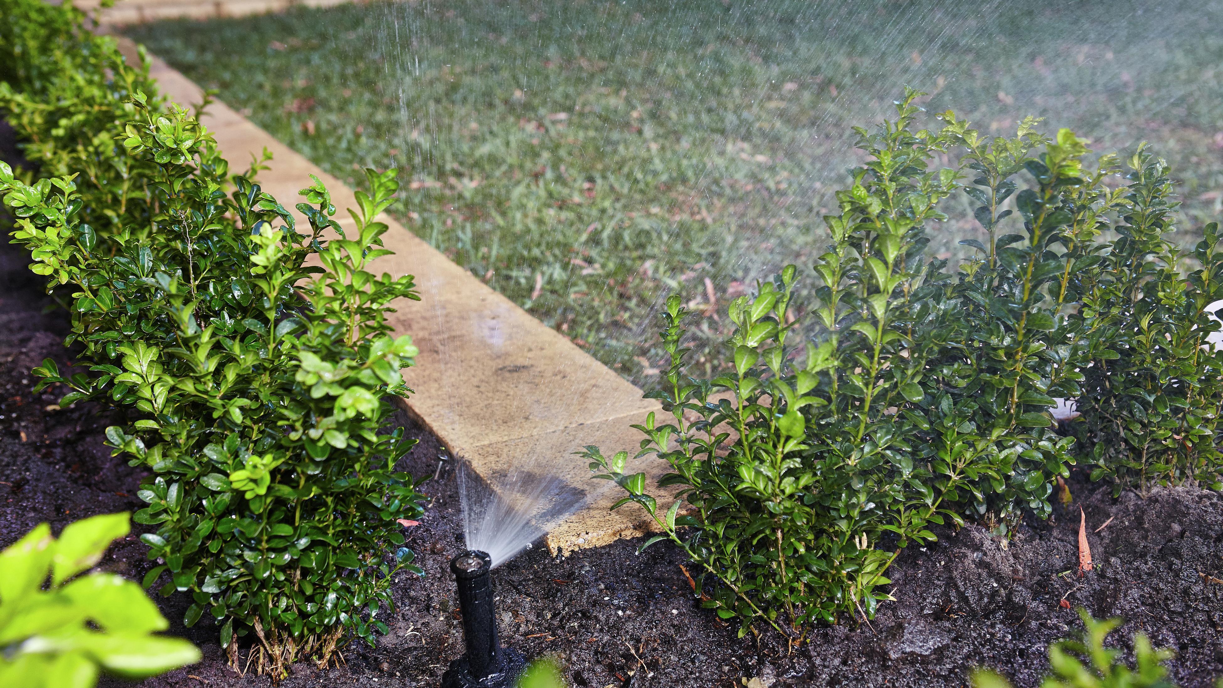 Sprinkler watering lawn and plants.
