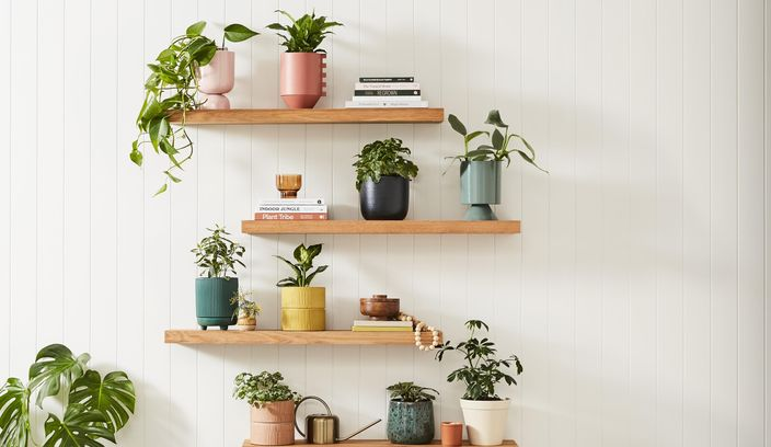 Timber floating shelves with plants on each shelve