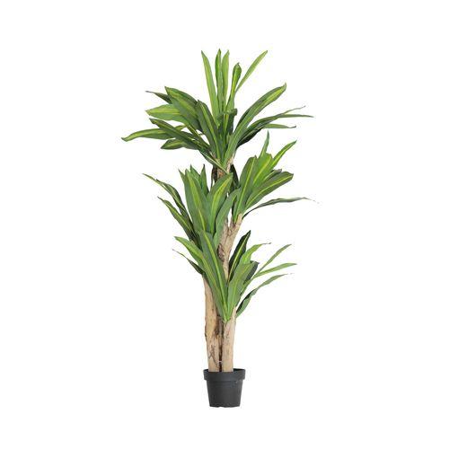 Unreal 160cm Dracaena Artificial Plant