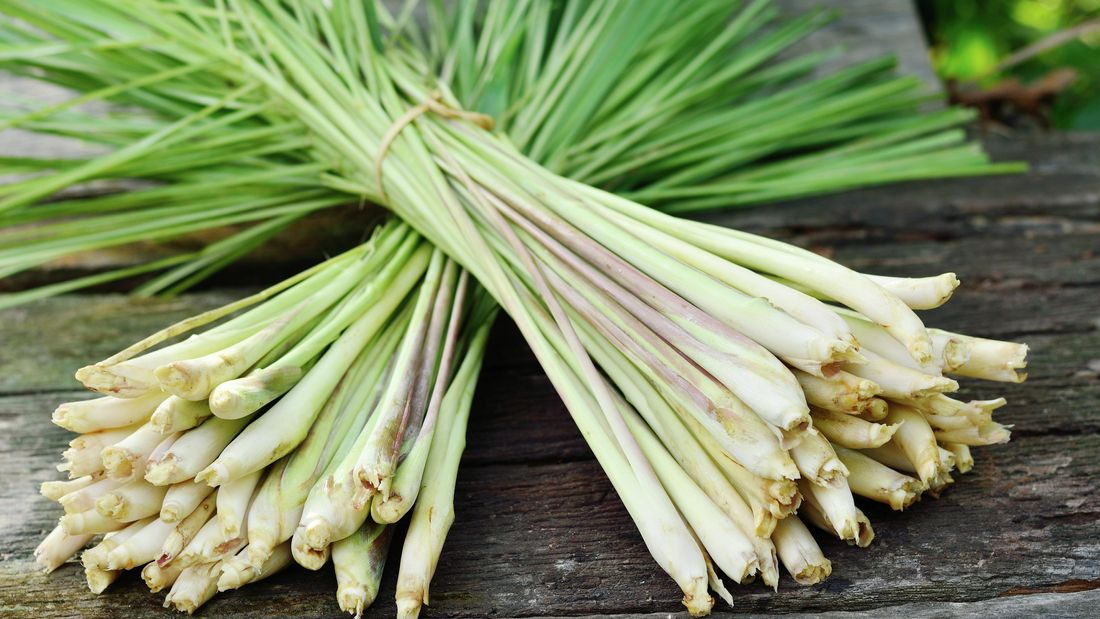 two bunches of lemongrass