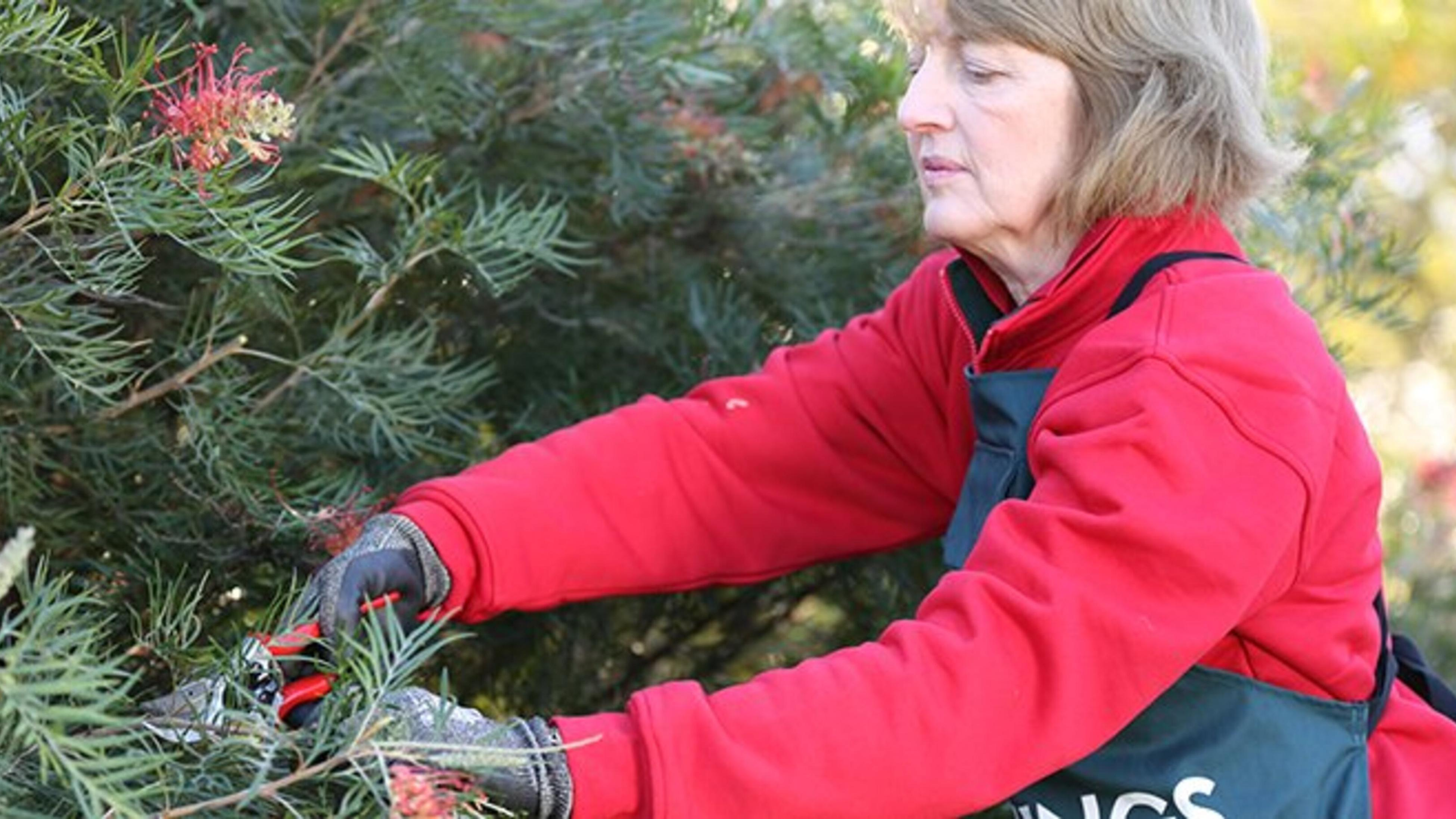 Person pruning plant.