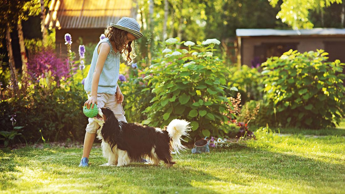 a kid with a dog playing in the lawn