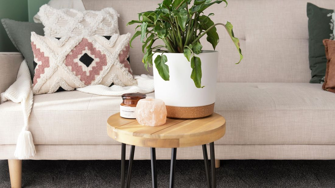 A philodendron plant on a small table.