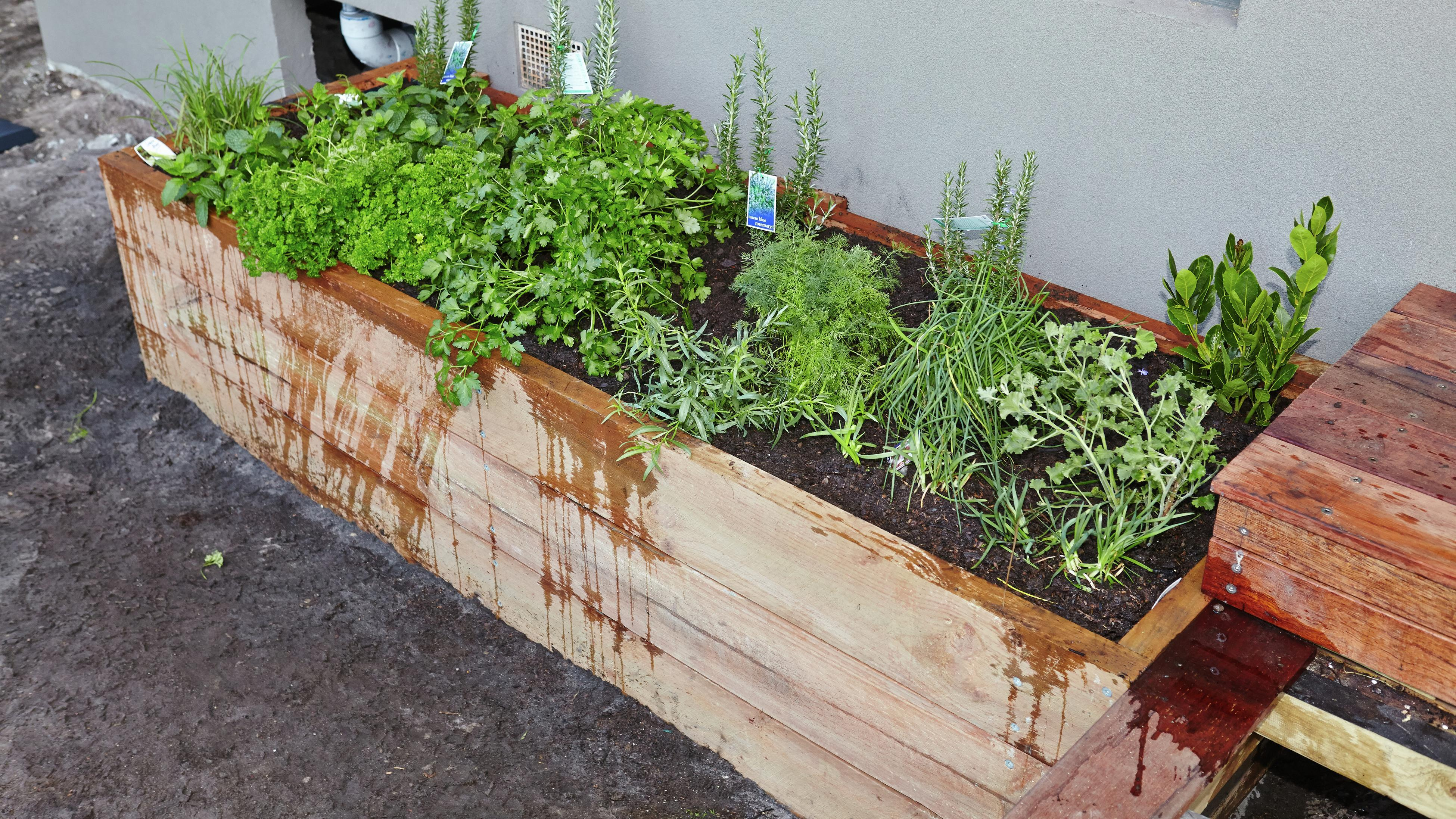 Raised garden bed with herbs.
