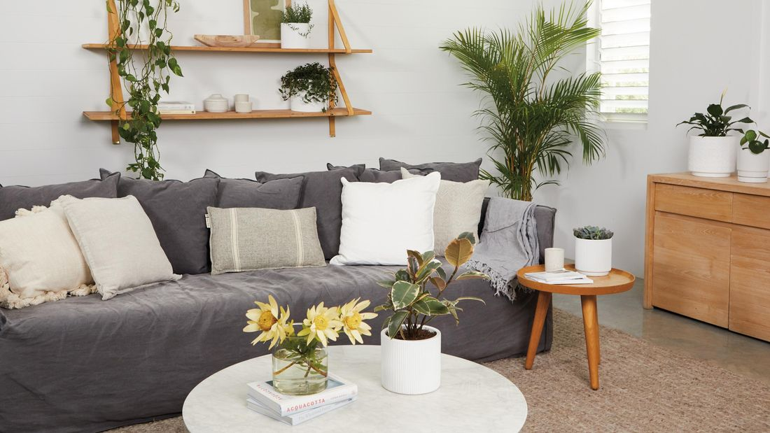 Lounge space with dark grey couch, assorted cushions, coffee tables, timber wall mounted shelving and potted plants.