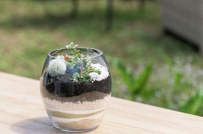 DIY Advice Image - How to make a terrarium. Marketing and Merch SharePoint blob storage upload.