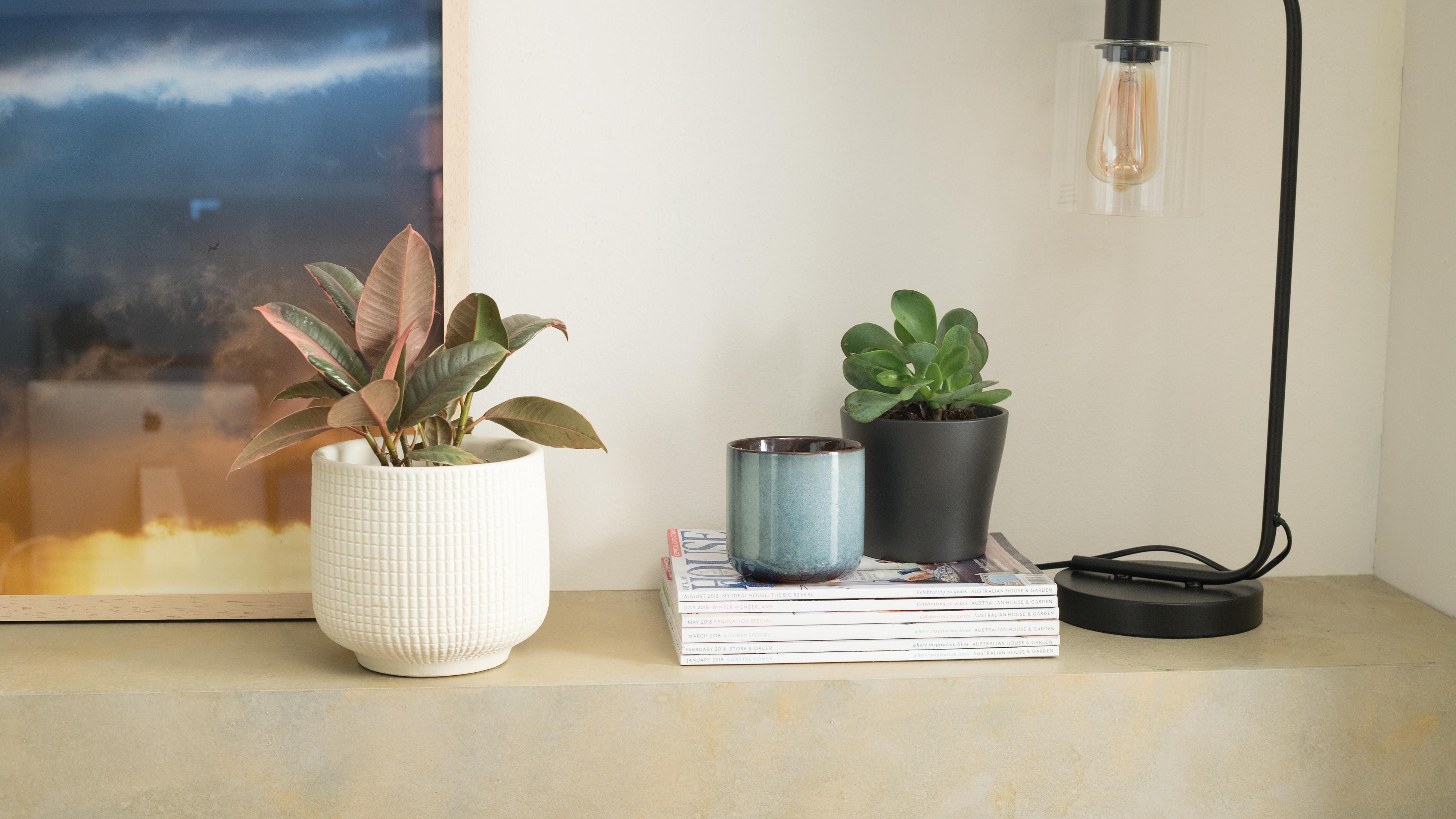 Potted plants, a stack of magazines and a lamps on a shelf