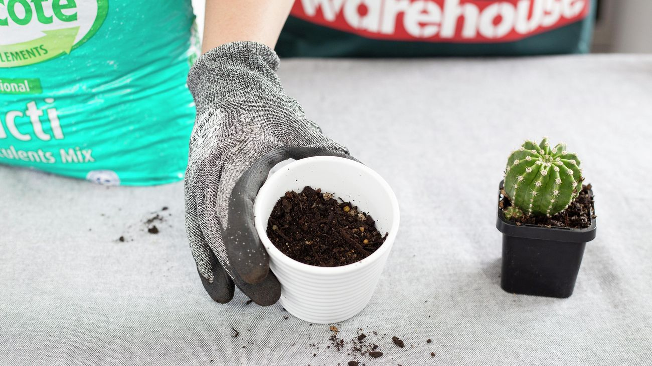 A person holding a small white pot with cactus potting mix in it.