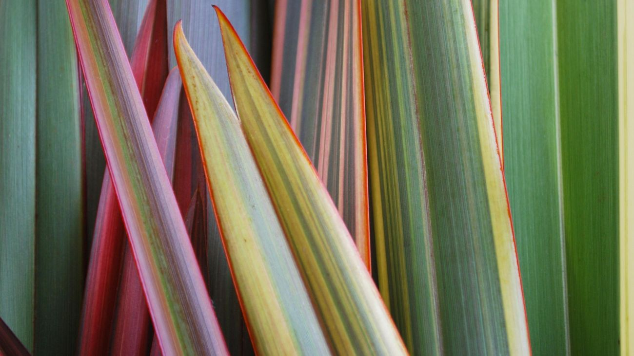 close up shot of flax leaves