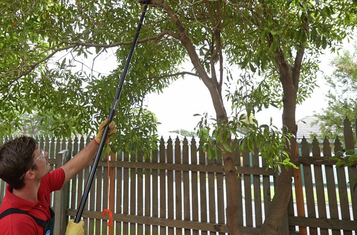Person wearing safety glasses and gloves using an extendable tool to prune a large twig off a tree.