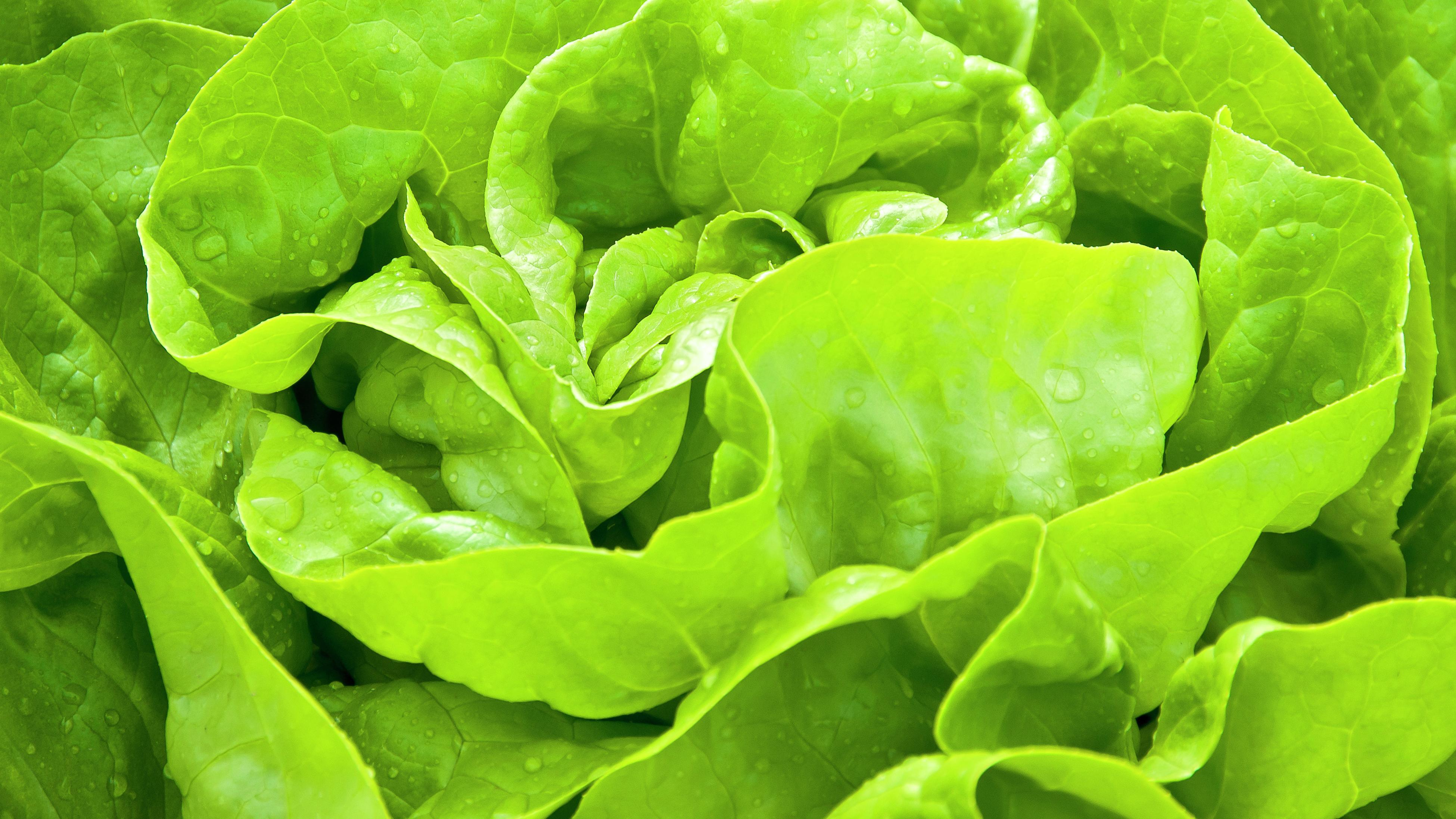 close up of a lettuce head