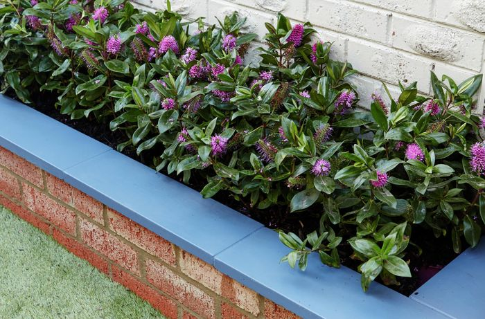 A brick planter box planted with flowering plants against a house wall